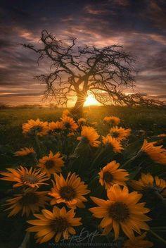 wonderful sunrise