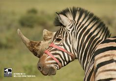 Save the Rhino: Zebra by Stick Animals in Print Ads Social Advertising, Print Advertising, Creative Advertising, Advertising Campaign, Print Ads, Funny Commercials, Funny Ads, Advertisement Examples, Desgin