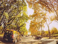 Seguimos navegando por Figueroa Alcorta 👍🚗☀ #gopro #goprolife #goprooftheday #photooftheday #nature #driving #auto #car #renault #vsco #vscocam #igersargentina #igers #argentina #buenosaires #goprolab