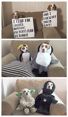 Paws in crime  // funny pictures - funny photos - funny images - funny pics - funny quotes - #lol #humor #funnypictures