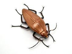 Copper-Toned Goldstone Beetle - flameworked glass beetle figurine via Etsy.