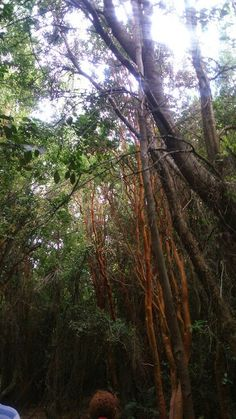 Bosque de las sombras Chubut Argentina