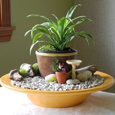 Fast & Easy Indoor Miniature Garden Ideas for the Black Thumb