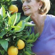 How to Grow and Care for Potted Lemon Trees | eHow