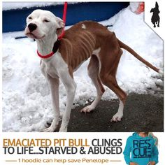Abandoned, Abused and Starved...This is Lilly and she needs our help! She was abandoned after being starved almost to death and left in the cold. Pibbles & More Animal Rescue, Inc - PMAR rescued this amazing pitbull.