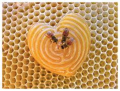 the sacred geometry of natural honeycomb from the bees (carved beeswax heart from Whitney Krueger) I Love Heart, My Heart, Labyrinth Maze, I Love Bees, Bee Art, Bee Happy, Save The Bees, Milk And Honey, Bees Knees
