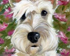 SPARROW Wheaten Scottish Terrier