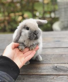 All About Animals, Like Animals, Cute Baby Animals, Funny Animals, Animals And Pets, Funny Rabbit, Rabbit Life, Rabbit Pictures, Baby Puppies