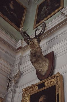 oil paintings + taxidermy    ...BTW,Please Check this out:  http://artcaffeine.imobileappsys.com