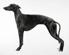 Jonathan Delafield Cook | Whippet II (2016) | Available for Sale | Artsy