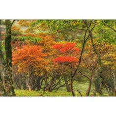 【yoichi.oshima】さんのInstagramをピンしています。 《大台ケ原の木々も色づいてきました。あともう少しで紅葉が楽しめそうです。 . #紅葉 #森林 #大台ケ原 #日本百名山 #ハイキング #秋 #登山 #山 #靄 #早朝 #朝方 #forest #лес #japan #Япония #Dawn #рассвет  #Nature #природа  #Mountain #Гора #PHOS_JAPAN #team_jp_西 #Lovers_Nippon #Loves_Nippon #special_spot_ #bestjapanpics #ファインダー越しの私の世界 #写真好きな人と繋がりたい #写真撮ってる人と繋がりたい》
