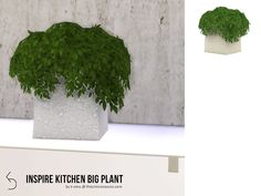 Discover and download the best furniture for the Sims 4 - all available for free at the ultime Sims directory. INSPIRE Kitchen Big Plant by k-omu2