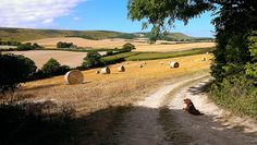After the Sussex harvest.