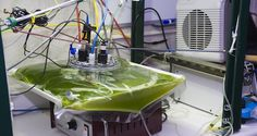 "NASA - NASA Envisions ""Clean Energy"" From Algae Grown in Waste Water"