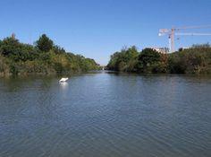 Ferrara - Precisazione in merito agli abbattimenti di alberi sull'argine del canale Boicelli