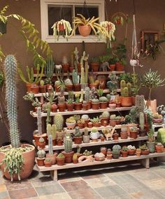 Tips for Care in Cactus Care Check out some tips for cacti . Tips for Care in Cactus Cactus House Plants, House Plants Decor, Plant Decor, Garden Plants, Indoor Plants, Indoor Cactus, Balcony Garden, Succulent Gardening, Cacti And Succulents