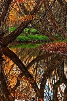 Autumn Creek Beautiful Reflection