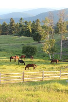 Country Living ~ A horse ranch