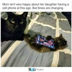Funny animal picture dump of the day 25 pics funny cat faces, funny kittens, Funny Cat Faces, Funny Kittens, Cute Funny Animals, Funny Cute, Cats And Kittens, Cute Cats, Top Funny, Funny Pics, Ragdoll Kittens