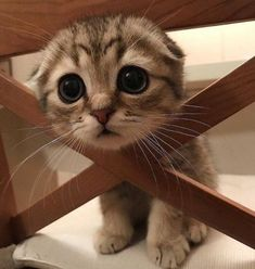 Love Cute Animals shares pics of playful animals, cute baby animals, dogs that stay cute, cute cats and kittens and funny animal images. Baby Animals Pictures, Cute Animal Pictures, Funny Pictures, Animal Pics, Animals Images, Baby Pictures, Funny Animal Images, Funny Cat Photos, Adorable Pictures