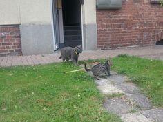 Katzen Toni und Cherry