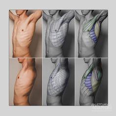 s - anatomyAnatomy Reference, Ref Anatomy, Human Anatomy, Reference Anatomy Body Reference Drawing, Human Poses Reference, Anatomy Reference, Anatomy Study, Human Anatomy Drawing, Human Body Anatomy, Anatomy Poses, Anatomy Sketches, Anatomy For Artists