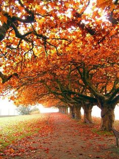 Autumn colours are so incredibly vibrant yet if an artist were to paint trees with such vivid colours .....