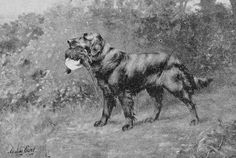 Ch Darenth patriarch to all present day Flatcoats (1892) - Owner M L Shuter and Norton Kirby - Paintig by Miss Maude Earl