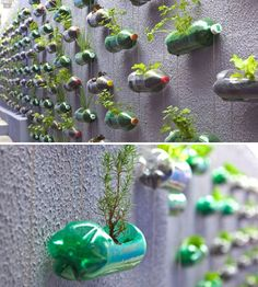 Wall of planters made from recycled plastic bottles - Closer spacing and clear and super strong Vitamin water bottles would be an improvement. This would be fantastic for baby lettuce or herbs! Diy Projects Plastic Bottles, Reuse Plastic Bottles, Plastic Bottle Crafts, Use Of Plastic, Recycled Bottles, Diy Magazine Holder, Plastic Bottle Planter, Rotten, Bottle Garden