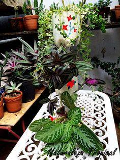 Naturaleza Tropical: Como hacer una mini-fuente con plantas y pomos des...