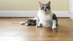 Cat Myths & Misconceptions - Take Tidy's quiz and test your knowledge!