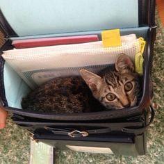 #猫 #子猫 #仔猫 #ネコ #ねこ #ねこ部 #neko #cat #babycat #instacat #webstagram #instagram #catgram #catstagram #kitty #kittygram #kittycat #meow #catsofinstagram #catoftheday #nekostagram