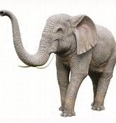 Image result for Elephant Trunk Up Design Elephant Trunk Up, Elephant Images, Art Images, Journaling, Trunks, Printables, Animals, Design, Elephants