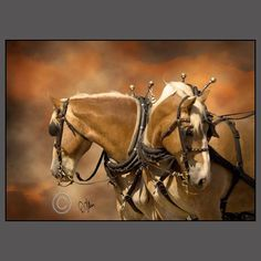 HORSE PHOTOS AND HORSE PICTURES