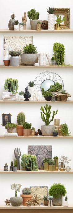 This is WALLPAPER !  Cactus on Shelves, a wall mural by KOZIEL