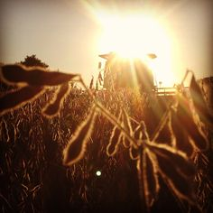 Help move equipment to a field yesterday evening and the sunset was just beautiful as we opening up the field. jentsfrontportch.com #harvest #farm