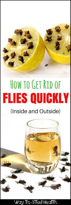 House flies -- they invade our homes, spoil our picnics and keep us swatting all summer long. Here's how to get rid of flies quickly and naturally. Keep Flies Away, Get Rid Of Flies, Flys In The House, Fly Remedies, Natural Remedies, Health Remedies, House Fly Traps, Killing Flies, What Kills Flies