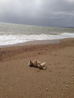 Love my back rubs at the beach