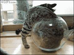 coisas de gato