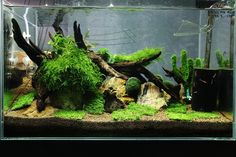 Planted tank / aquascape