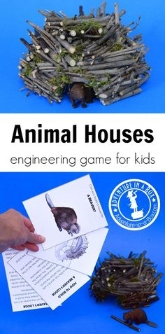 Steam Activities, Nature Activities, Science Activities, Animal Activities For Kids, Science Books, Science Education, Science Experiments, Stem Projects, Animal Projects