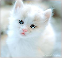 """Kitty - so beautiful !! (=^.^=) Thanks, Pinterest Pinners, for stopping by, viewing, re-pinning, & following my boards.  Have a beautiful day! ^..^ and """"Feel free to share on Pinterest ^..^   #catsandme #cats"""
