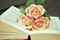 libri e fiori   books and flowers