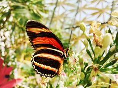 Selective Focus Photograph of Black and Yellow Butterfly  Free Stock Photo