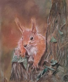 'Red Squirrel' by Anna Hoskyn. Red Squirrel in Derwent pastel pencils on tan a3 pastel paper. Reference photo by Danny Brannigan in the Facebook group 'photos for artists.
