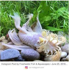 2112 best aquarium fish freshwater saltwater fish sea life