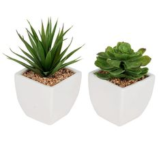 Succulent in Ceramic Pot- 3.75 in.