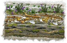 Seashore Peavine | by Kirsten Chursinoff