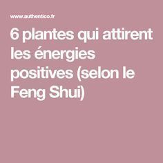 6 plantes qui attirent les énergies positives (selon le Feng Shui) FLORISTA LA PERLE RARE 👑.