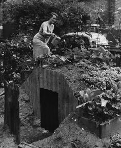 A woman in Clapham (south London) waters vegetables planted on the roof of her Anderson shelter in the garden.